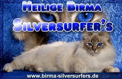 silversurfers1